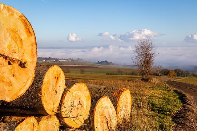 Tree Trunks, Landscape, Nature, Wide, Fog, Clouds, Blue