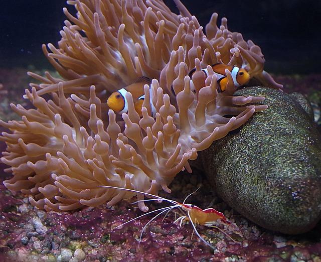 Clownfish, Crawfish, Aquarium, Creature, Meeresbewohner