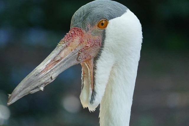 Head, Bill, Clunkers, Bird Park, Walsrode, Park, Macro