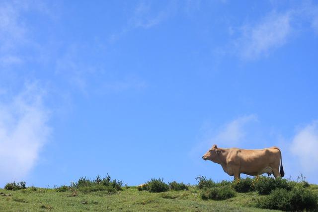 Landscape, Coa, Cow, Sky, Nature, Asturias