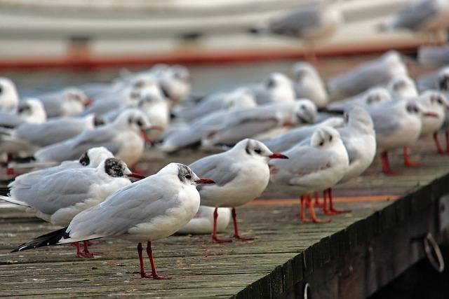 Gulls, Baltic Sea, Bridge, Birds, Coast, Water