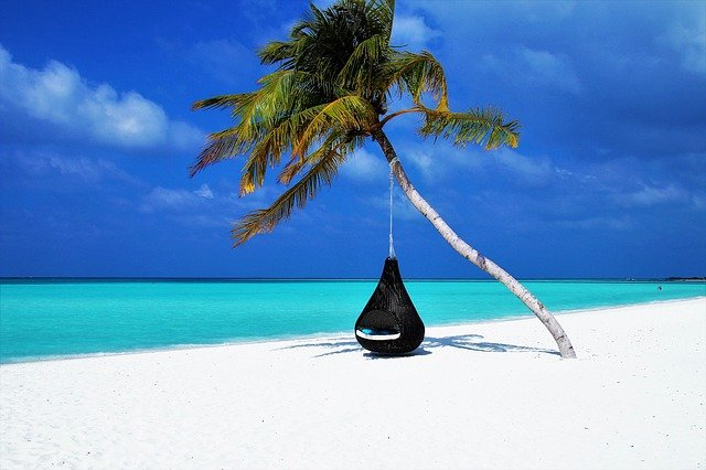 Maldives, Palm Tree, Hammock, Beach, Sand, Coast