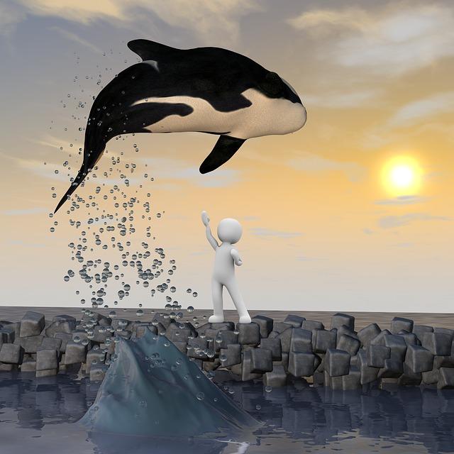 Willy, Freedom, Sea, Jump, Fly, Ocean, Coast