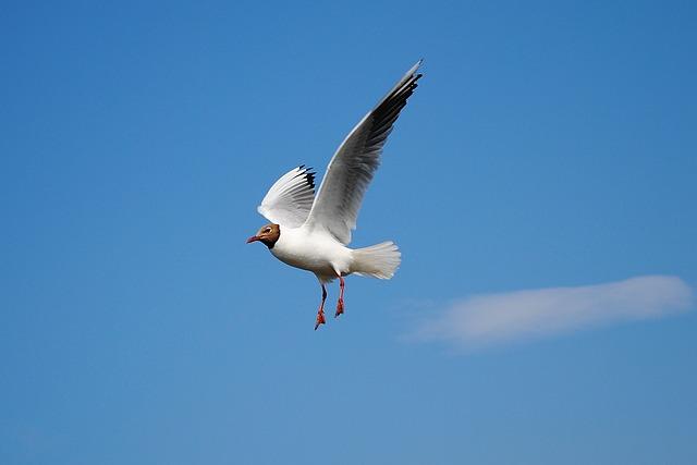 Seagull, Flying, Bird, Coast