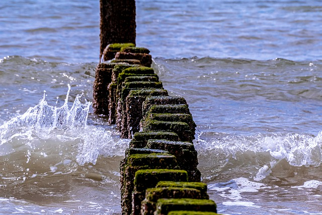 Breakwater, Coastal Protection, Sea, Piles, Wood