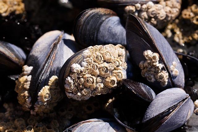 Mussels, Barnacles, Mytilus, Watt Area, Coastal Region
