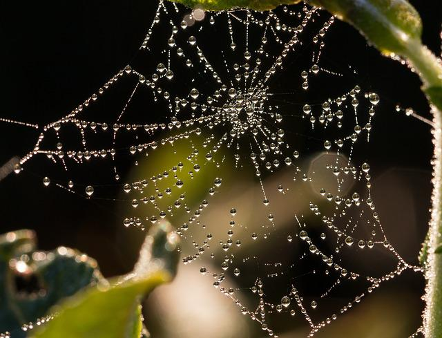 Cobweb, Dew, Drip, Morgentau, Network, Close, Macro