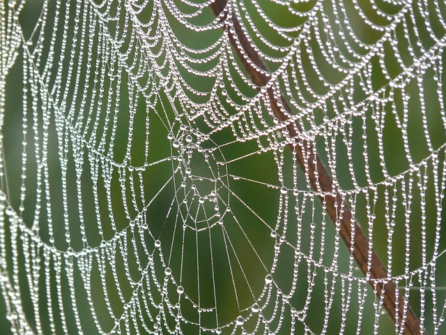 Cobweb, Morgentau, Dew, Dewdrop, Drip