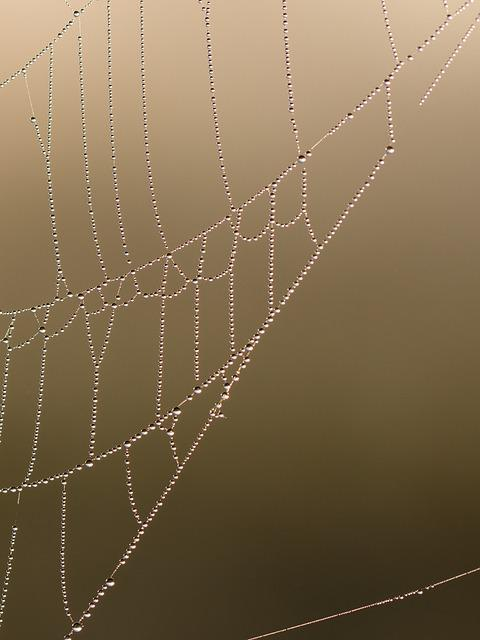Web, Cobweb, Morgentau, Drip, Dewdrop