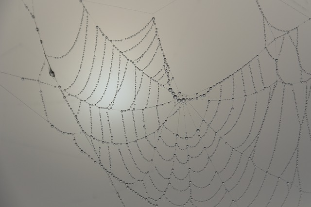 Cobweb, Beaded, Morgentau