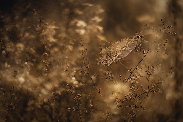 Spider Web, Cobweb, Web, Nature, Outdoors, Meadow