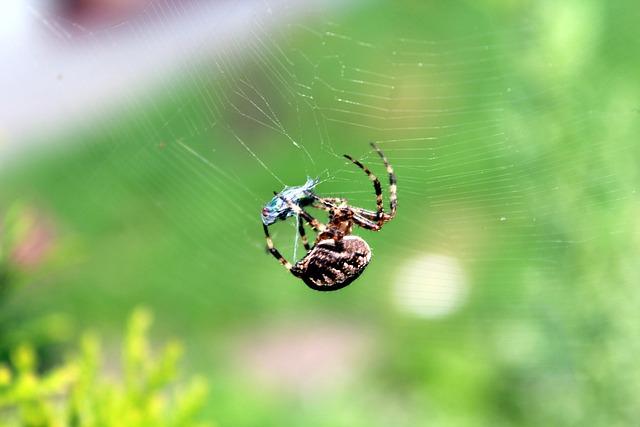 Spider, Cobweb, A Small Insect, Cobweb Predator