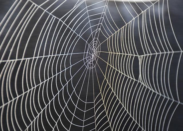 Cobweb, Spider, Nature, Animal, Fabric, Close Up