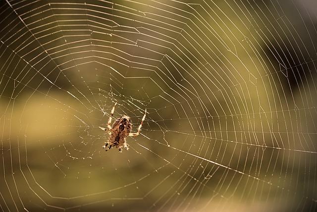 Spider, Araneus, Web, Cobweb, Insect, Web Spider