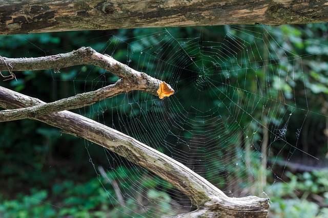 Cobweb, Back Light, Cobwebs, Animals, Spider, Network