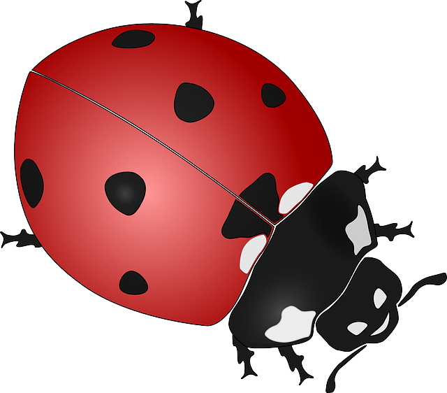 Ladybug, Insect, Beetles, Coccinellidae, Ladybirds, Red