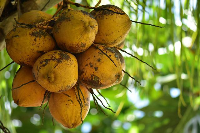 Coconuts, Coco, Palm, Tropical Plant, Food, Fruit, Tree