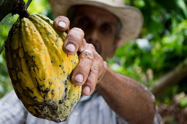 Cocoa, Man, Colombia, Peasant, Hand, Fruit