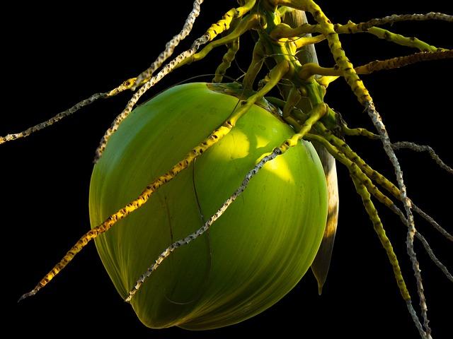 Coconut, Coconut Tree, Plant