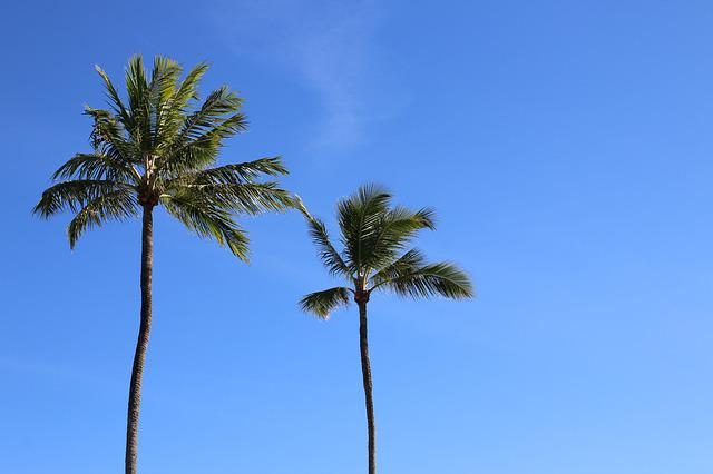 Coconut Trees, Beach, Nature, Litoral, Landscape
