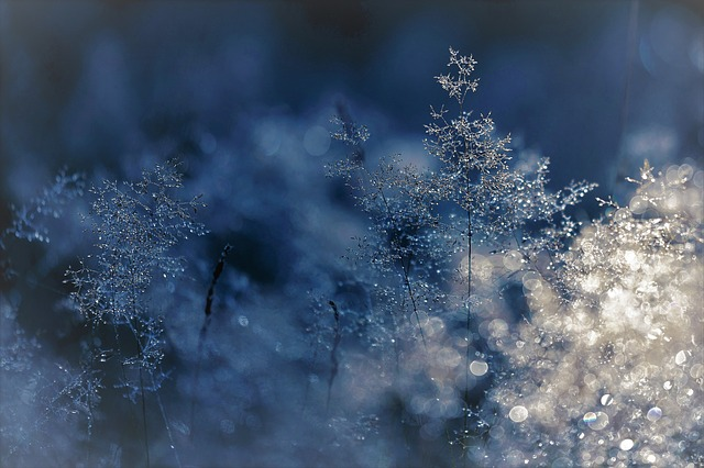 Winter, Cold, Grasses, Blue, Frost, Shrub
