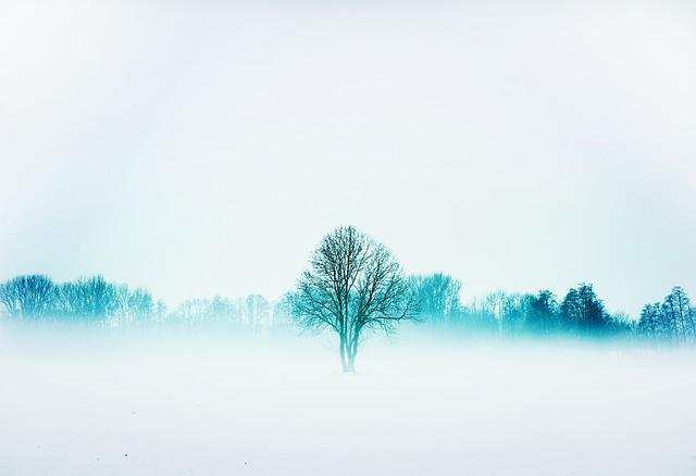 Nature, Winter, Fog, Frost, Snow, Cold, Mist, Open Air