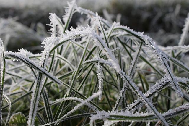 Grass, Winter, Wintry, Cold, Frost, Nature, Grasses