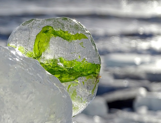 Sea, Ice, Weed, Winter, Cold Frost, Water, Icicle, Ball