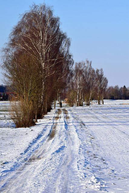 Snow, Winter, Frost, Cold, Frozen, Away, Trees, Kahl