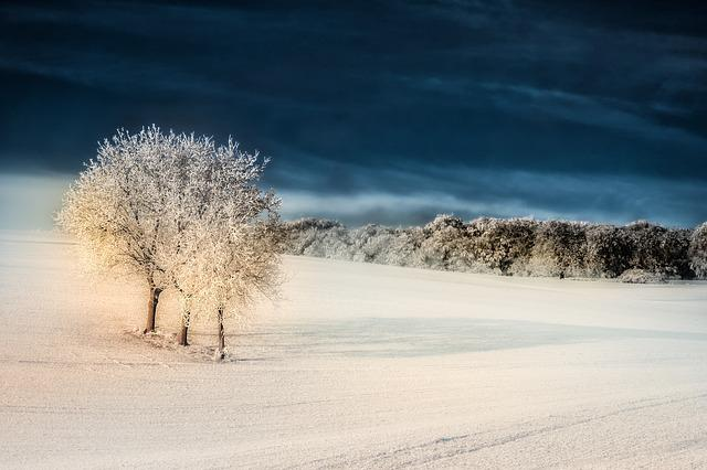 Winter, Snow, Tree, Iced, Hoarfrost, Mood, Frozen, Cold