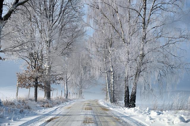 Winter, Way, Snow, Frost, Frozen, Cold, Season, Tree