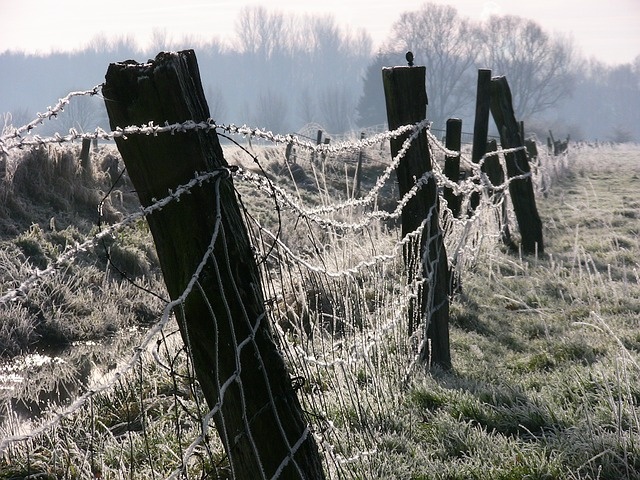 Ice, Winter, Fence, Cold, Hoarfrost, Wintry