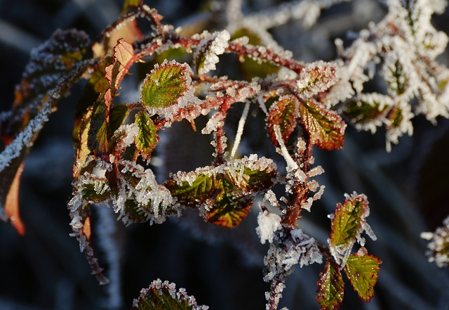 Frost, Frozen, Leaves, Cold, Winter, Iced, Hoarfrost
