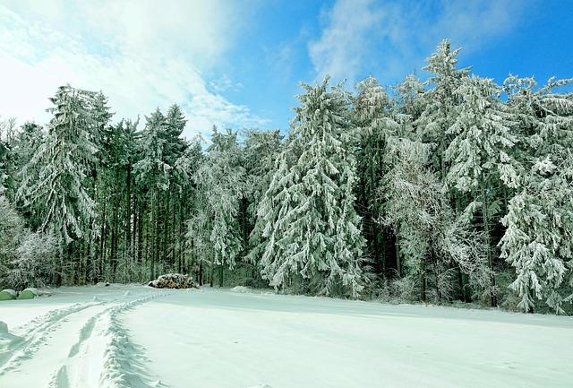 Snow, Winter, Cold, Frosty, Landscape, Snowy, Wintry
