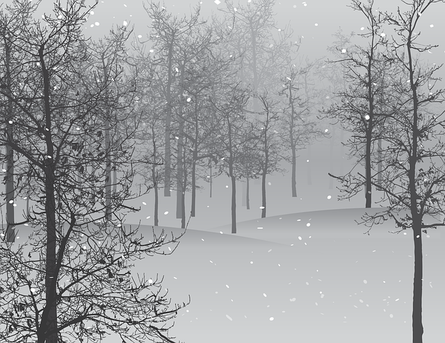 Snow, Scene, Trees, Isolated, Cold, Gray, Grey, Sleet