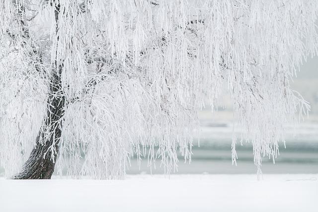 Winter, Tree, Snow, Landscape, Cold, December