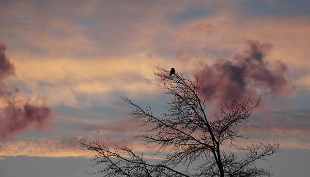 Tree, Dawn, Bird, Winter, Weather, Cold, Clouds