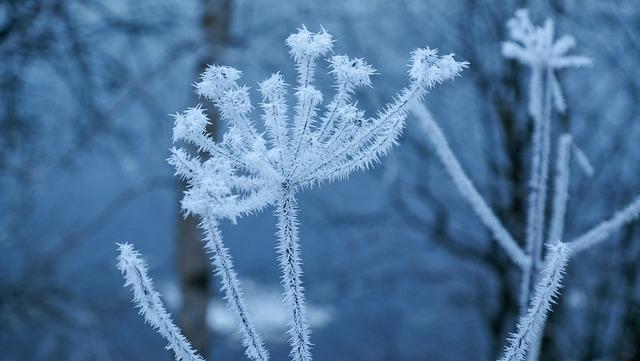 Leann, Winter, Snow, Frozen, Season, Frosty, Coldly