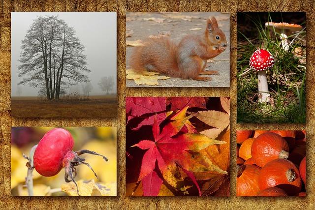 Autumn, Collage, Autumn Mood, Autumn Festival, Squirrel