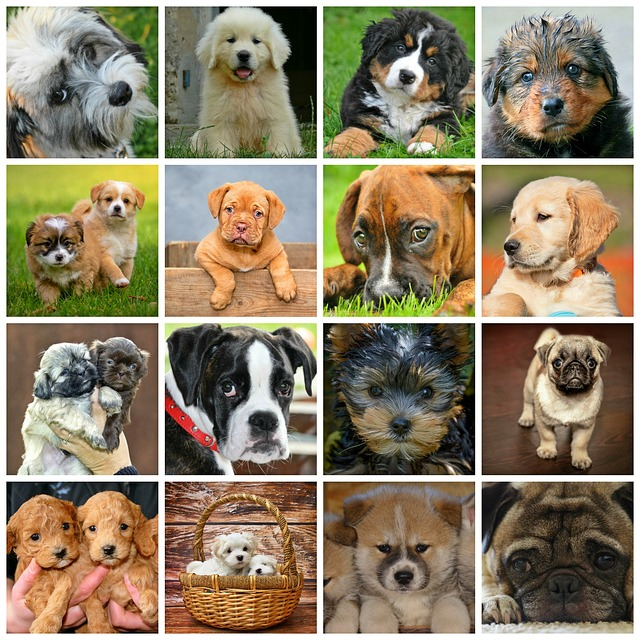 Collage, Dogs, Animals, Dog Puppies, Puppies