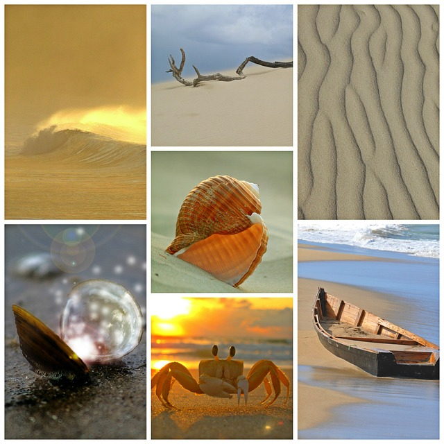Beach, Sea, Collage, Holiday, South, Mussels, Shell