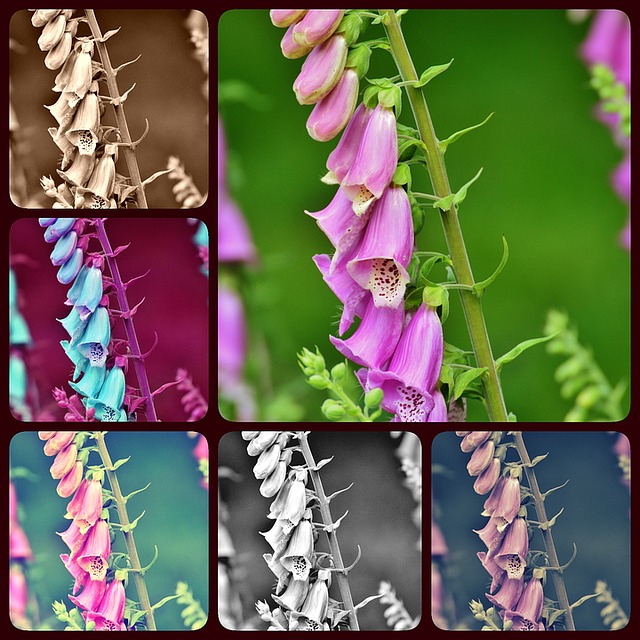 Collage, Thimble, Flower, Toxic, Bells, Plant