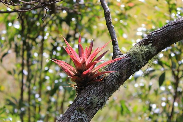 Plant, Nature, Tribe, Reddish, Colombia, Parasite