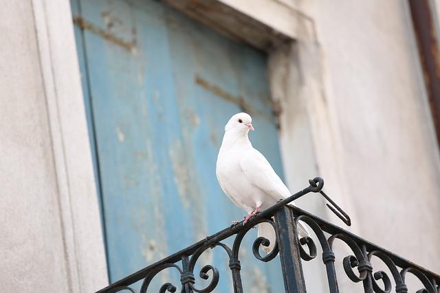 Colombina, Colombina White, Dove Wedding