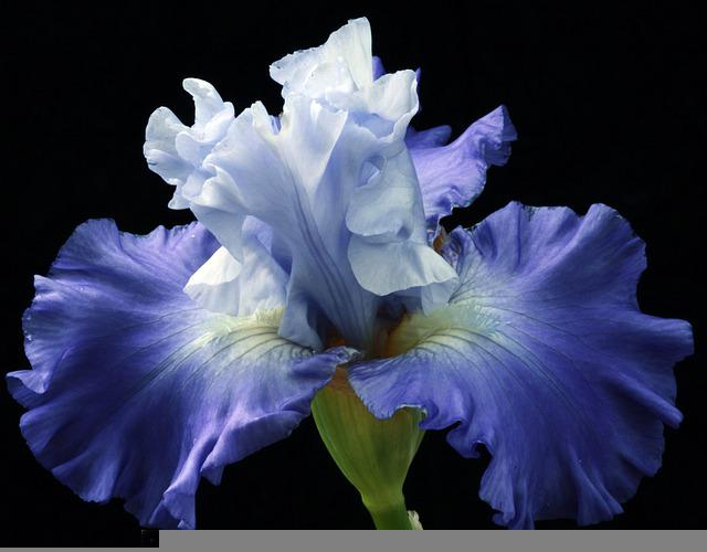 Blossom, Botany, Color, Colorful, Colors, Decorative