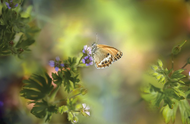 Butterfly, Butterflies, Insect, Macro, Nature, Color