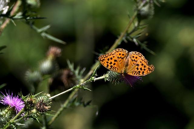 Butterfly, Ali, Color, Bloom, Prato, Nature