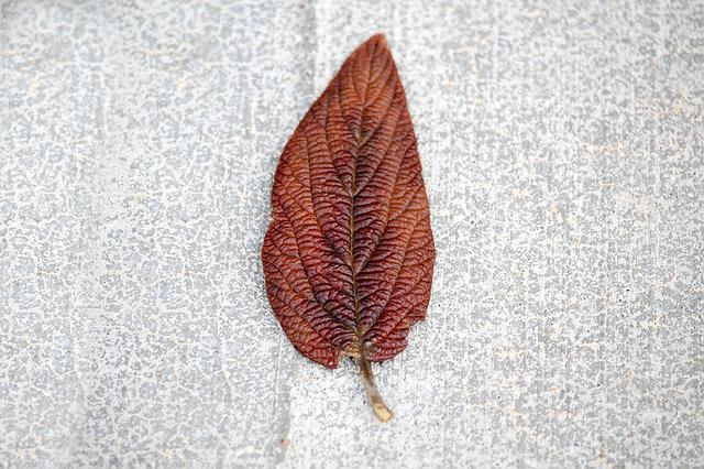 Desktop, Nature, Leaf, Concrete, Fall, Color, Flora