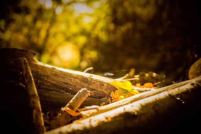 Autumn, Leaf, Leaves, Fall, Nature, Color