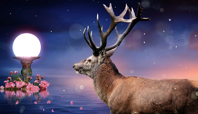 Reindeer, Deer, Nature, Light, Roses, Sea, Sky, Color